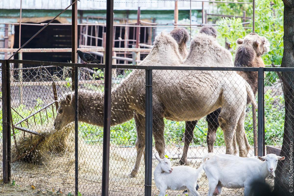 Пензенский зоопарк. Животные 3