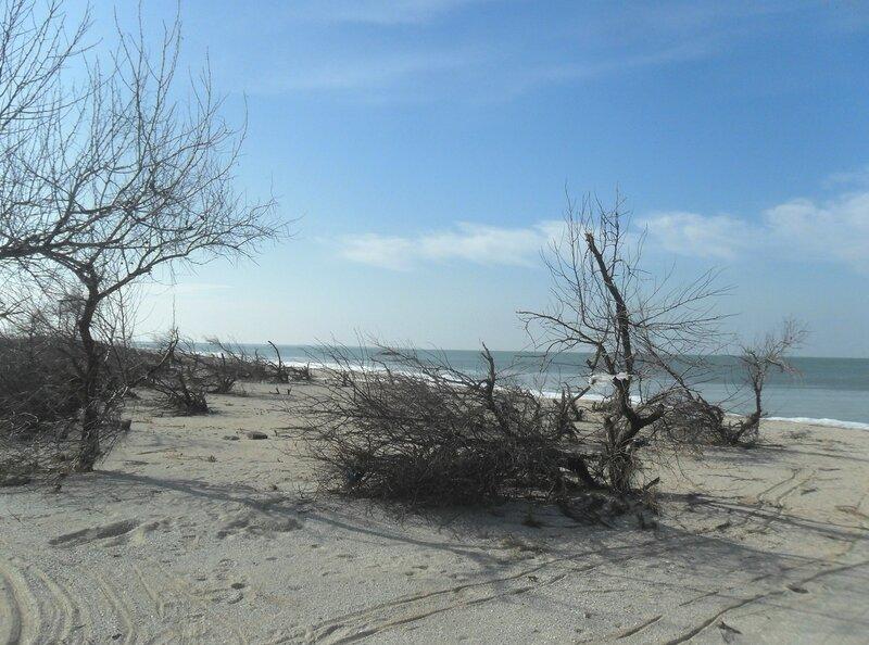 На февральском берегу ... SAM_5657.JPG