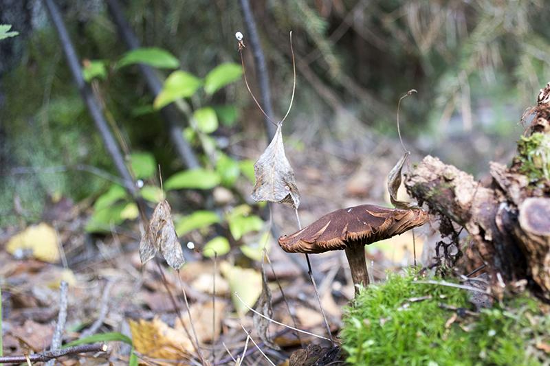 старый гриб