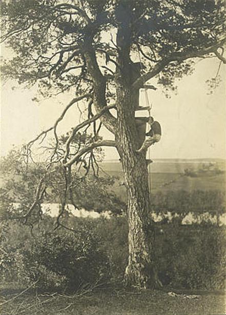 Gathering honey of wild bees in a tree, Minsk Province, 1900's. Photo by Aleksandr Serzhputovsky.