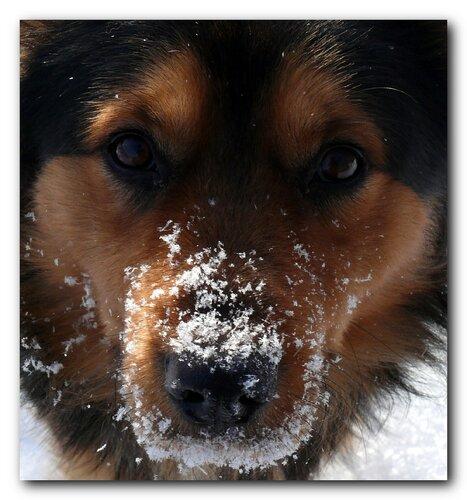 Встречный пёс...