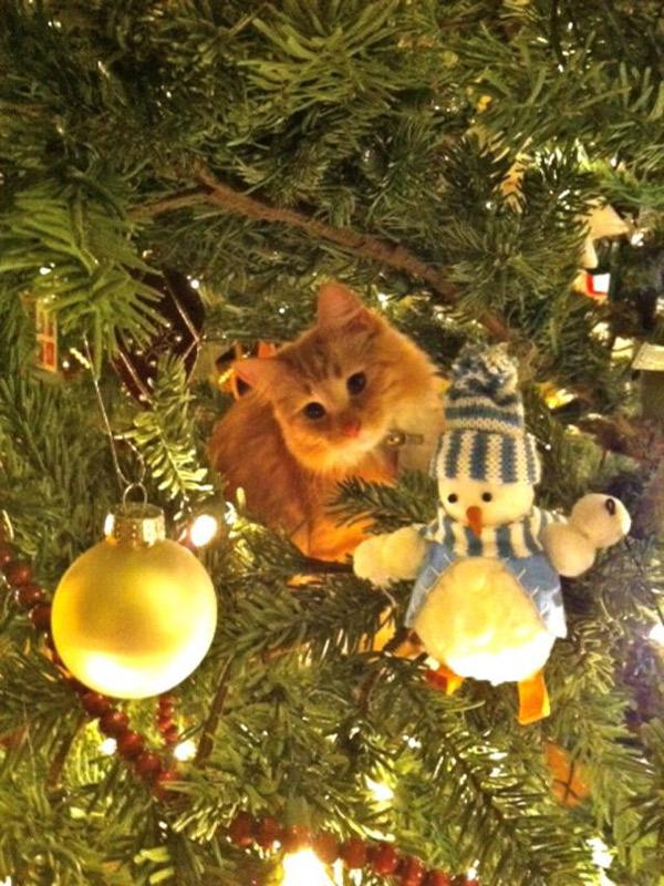 Коты на ёлке - фото 25