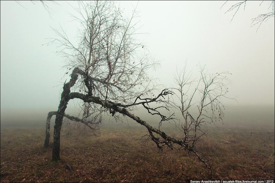 туманный лес на Ай-Петри