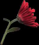 feli_l_flower4.png