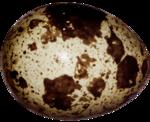EasterOnTheFarm_Element01 (28).png