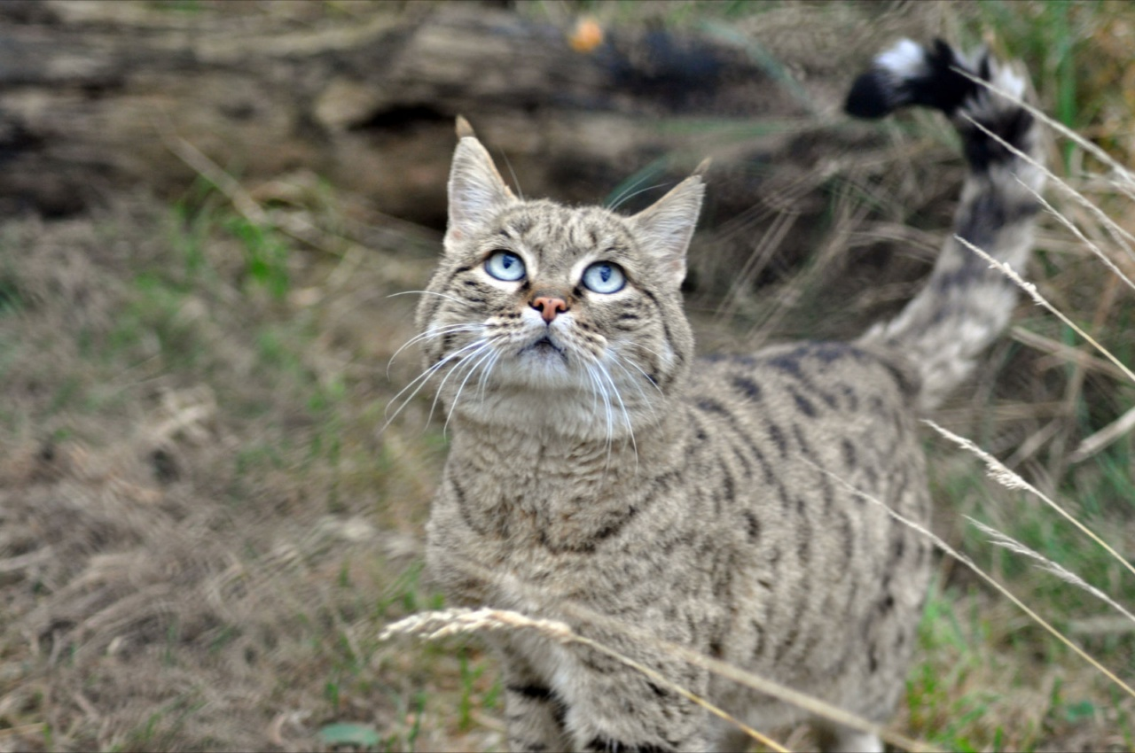 Feral cat personality