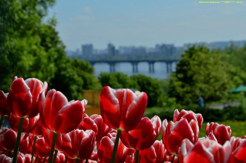Выставка тюльпанов Весенняя Феерия 2013 в Киеве.