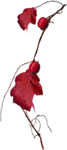 RR_HeartWhispers_Element (58).png