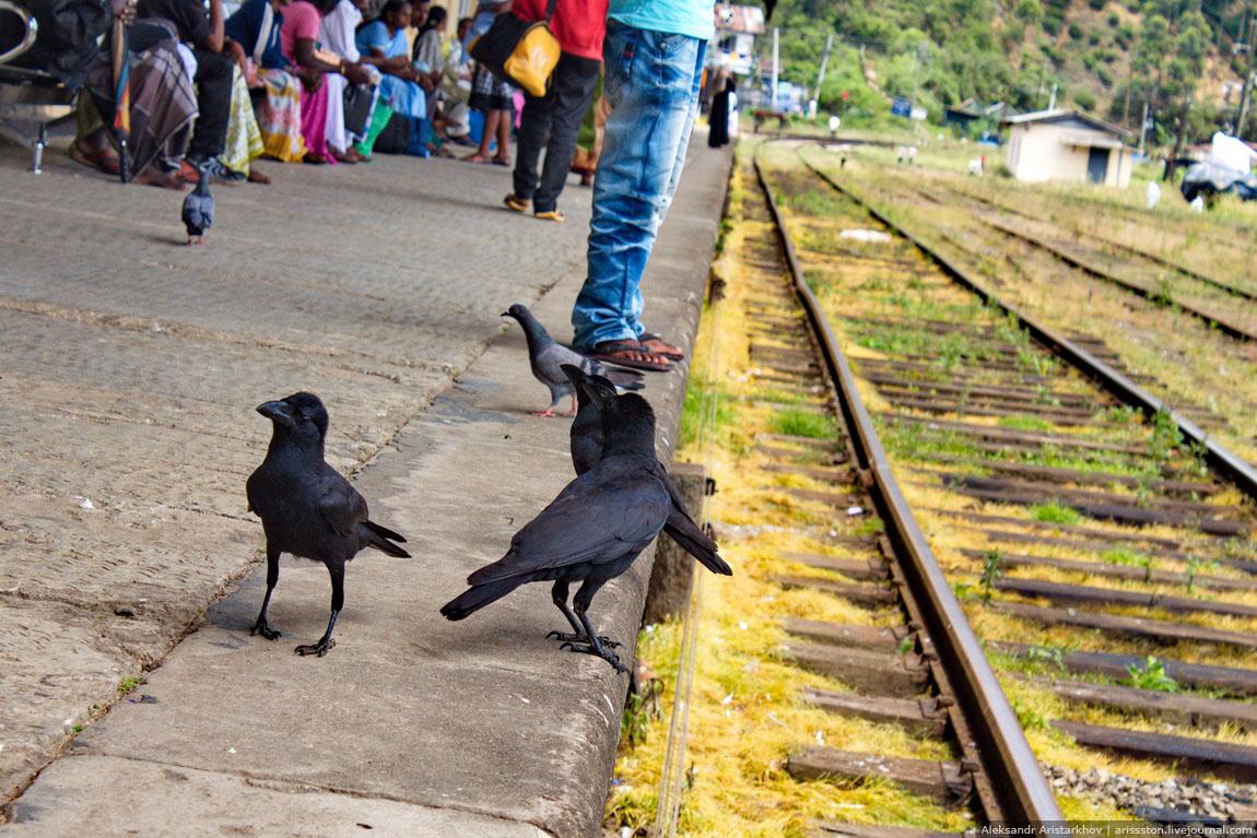 Шри-Ланка_Железная дорога_11
