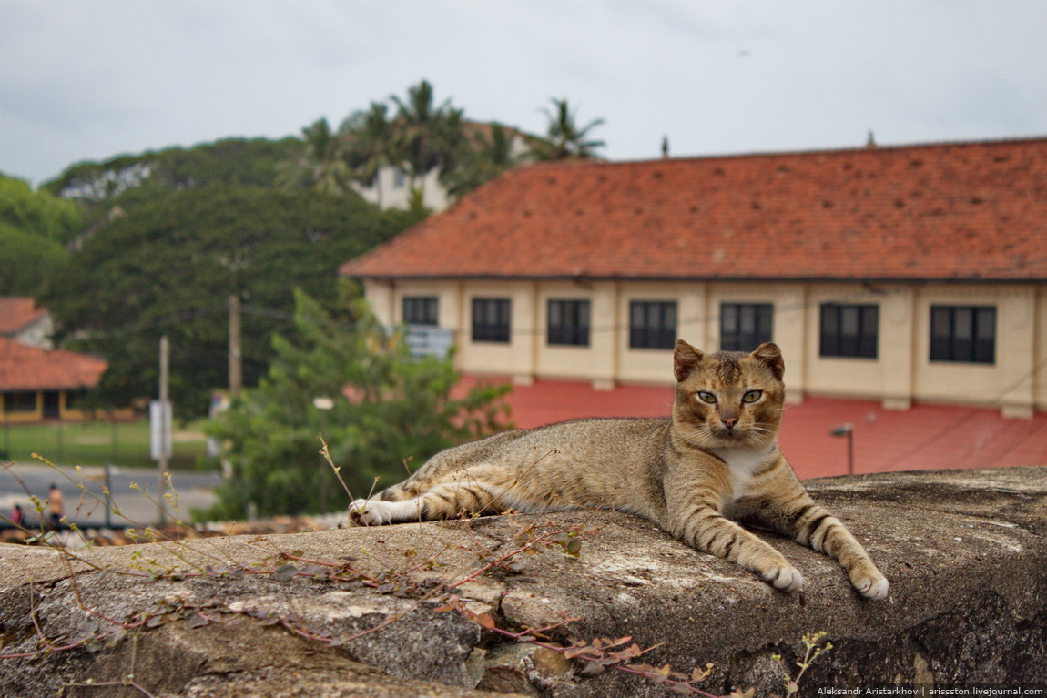 Шри-Ланка_Галле_28