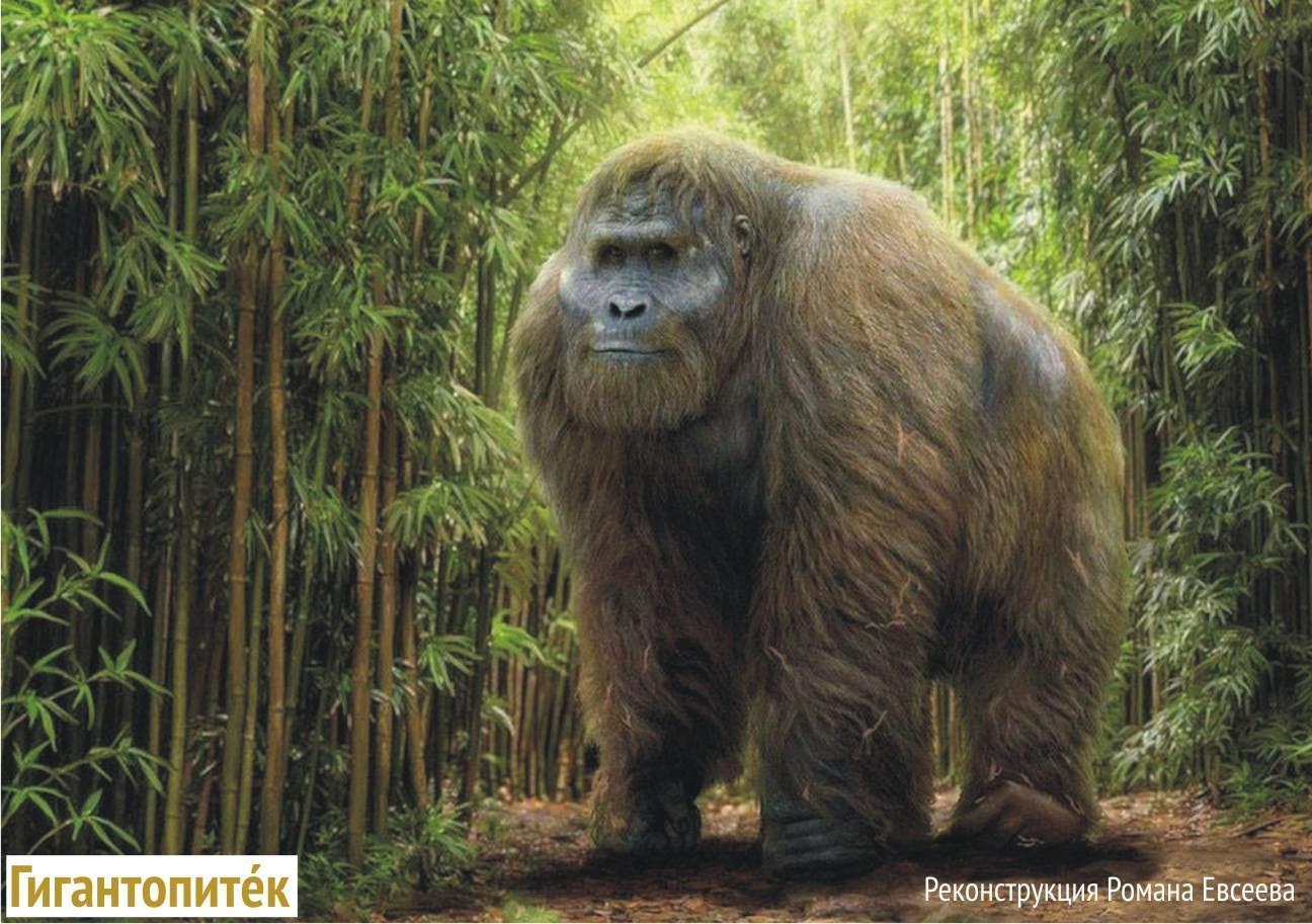 4. Мегатерий Мегатерий — это вымерший род наземных ленивцев эндемиков Южной Америки которые жили с к
