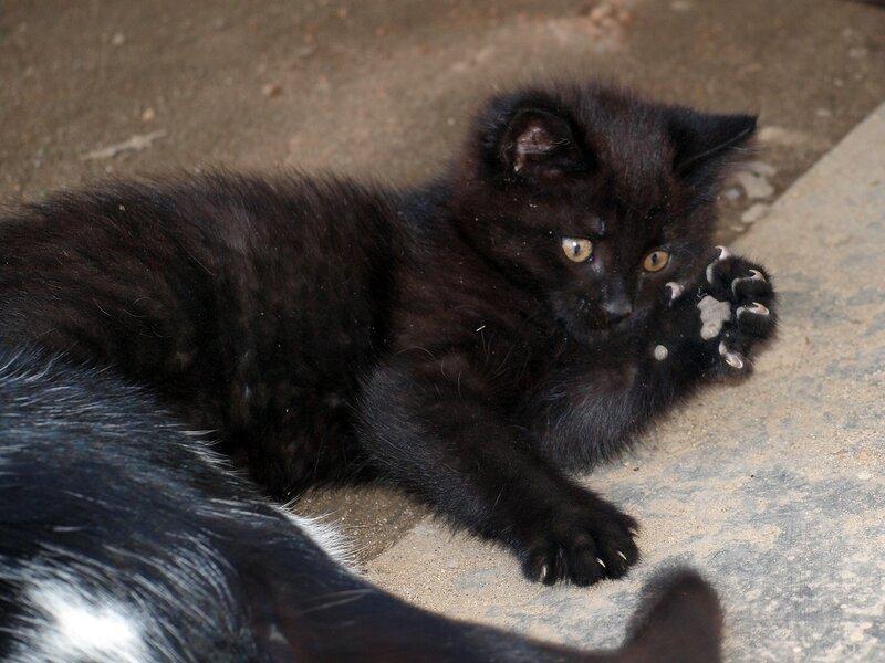 Кошки и котята спасателей P4281382.jpg