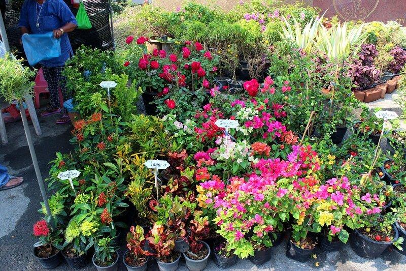 Цветы в горшках на рынке Талинг Чан, Бангкок