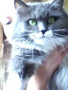 Винкс ланд - Фотки моей котейки и сестры!