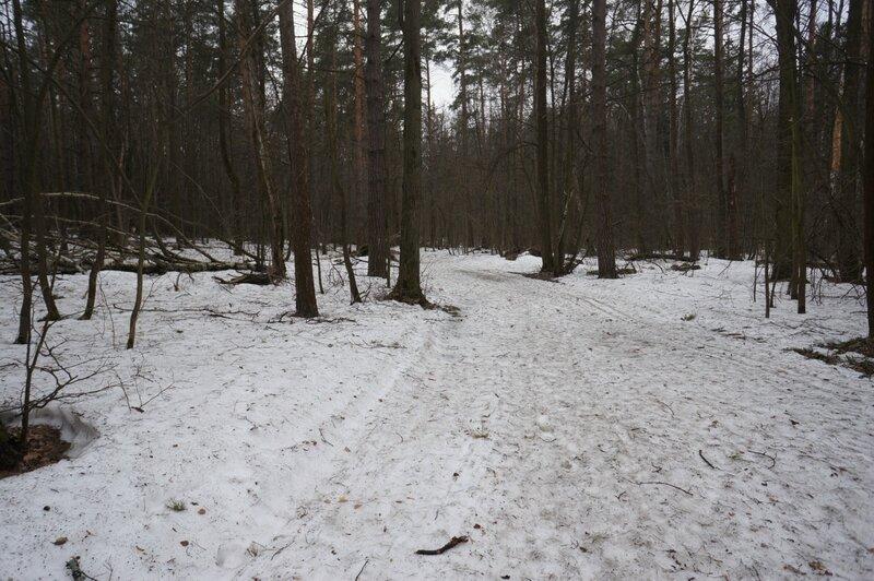 Лес, апрель, весна