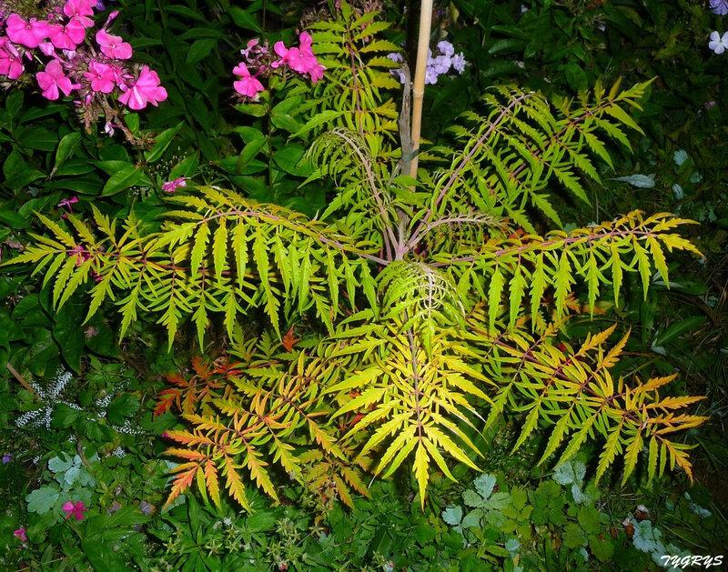 Редкие растения в наших садах - Страница 2 0_1390b1_4dd1ec29_XL