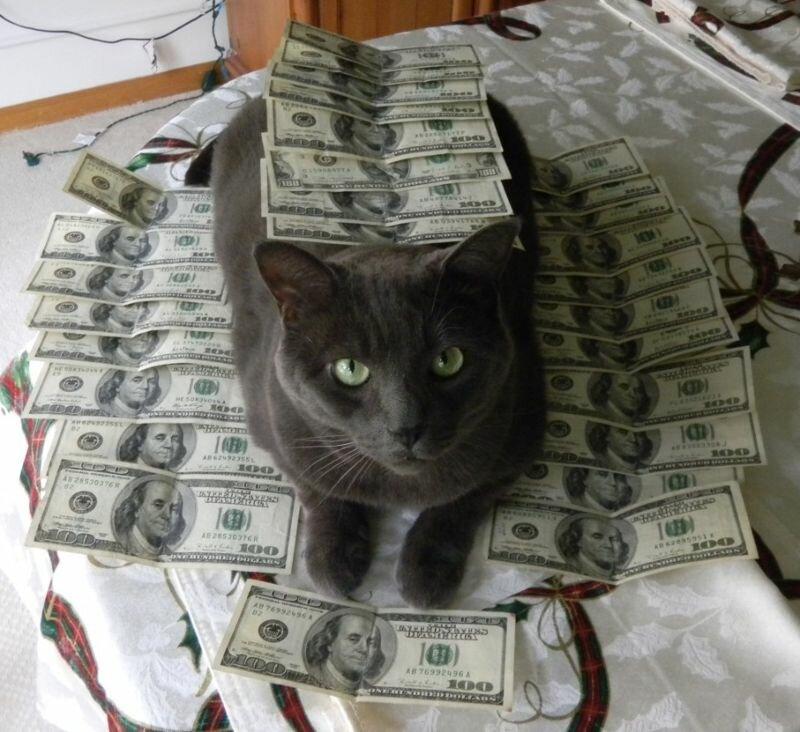 Котики известных гангстеров