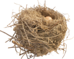 Wattled nests