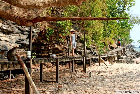 Тропа обезьян на ао нанге в краби