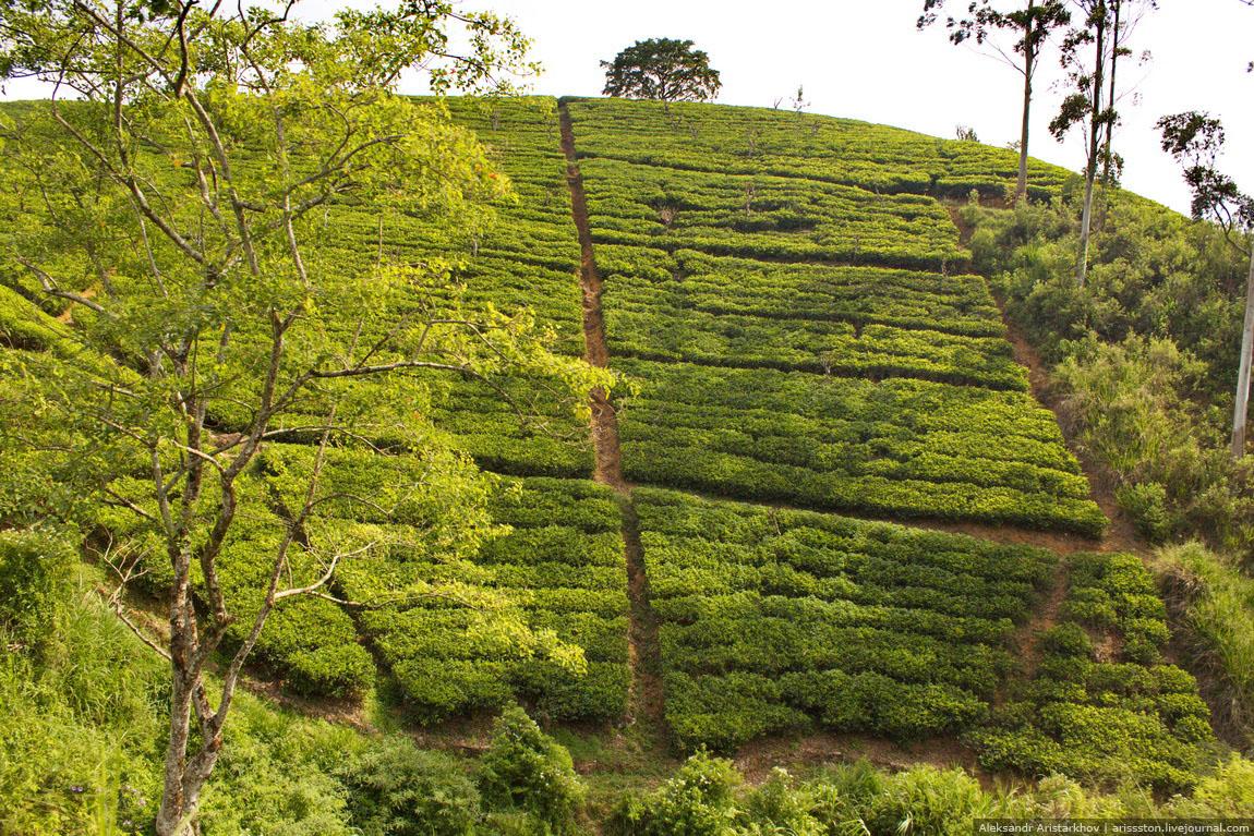 Шри-Ланка_Как угнать поезд_22
