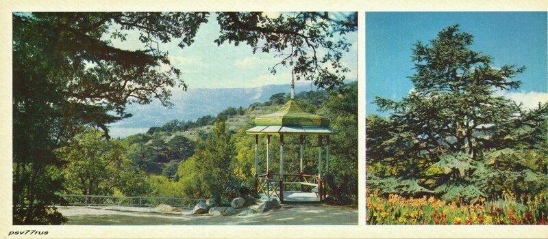 Беседка в Верхнем парке.  Кедр ливанский.
