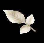 whiteleaf-(BrydkaM).png