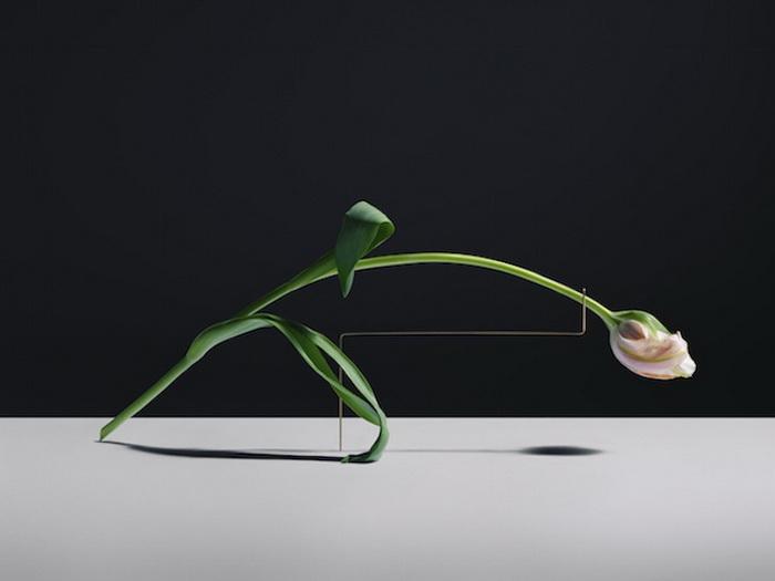 Минималистичные фотографии цветов Карла Кляйнера (Carl Kleiner)