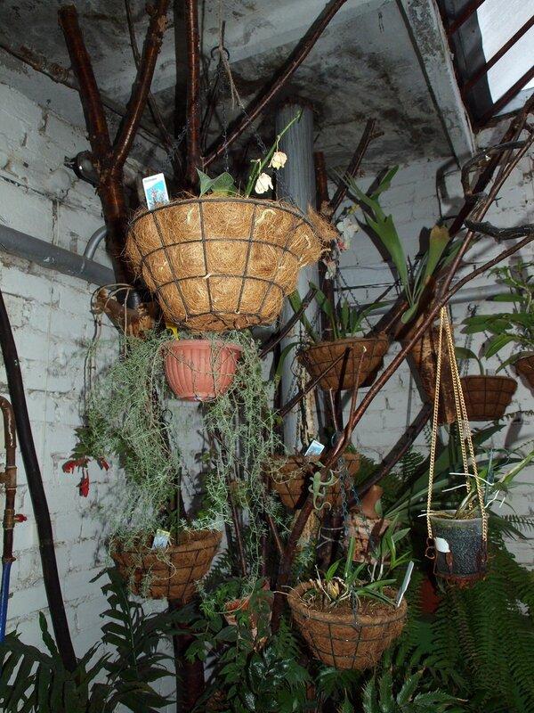 уголок орхидей и эпифитов