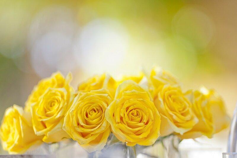 Днем рождения, фон для открытки желтые розы