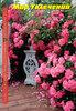 Розы, саженцы, многолетники в контейнерах 2013. Новый каталог!