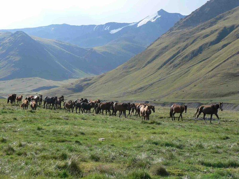 Мельников Сергей, Ни единого человека вокруг, только иногда встречаются табуны лошадей без пастухов