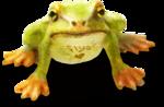 ldavi-wheretonowdreamer-loveflysfrog1b.png