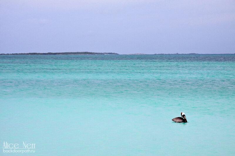 вода потрясающего цвета и пеликан на острове crasqui, los roques