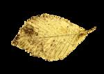 Gold Leaf_6.png