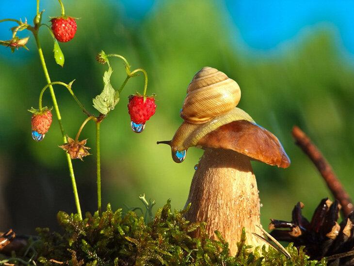 """Фото «Сказочные моменты """"маленького"""" мира» от Вячеслава Мищенко"""