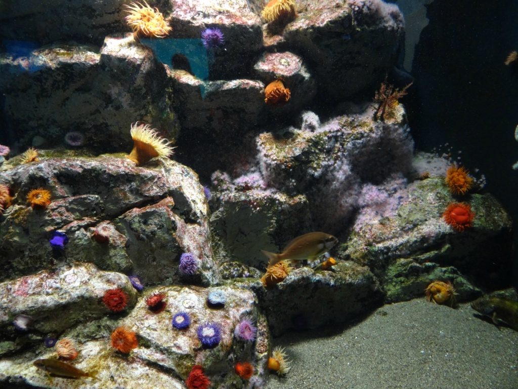 Токийский парк морской жизни