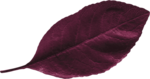 dp_mtw_Leaf2.png