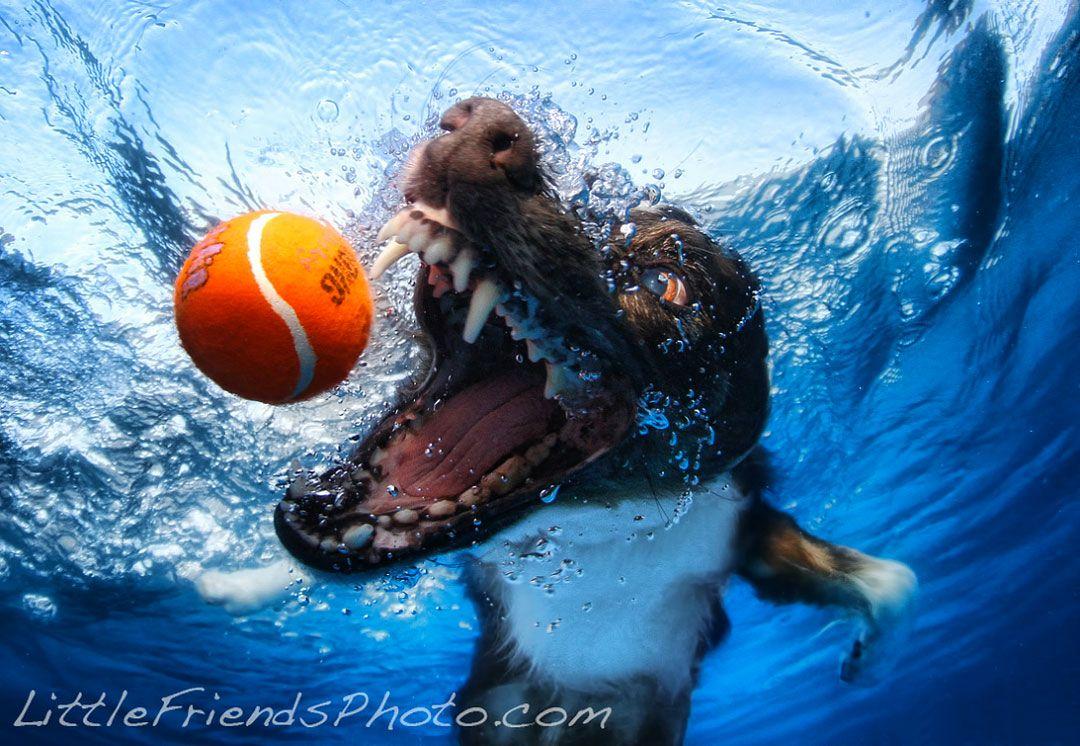 Фото собак под водой от Seth Casteel