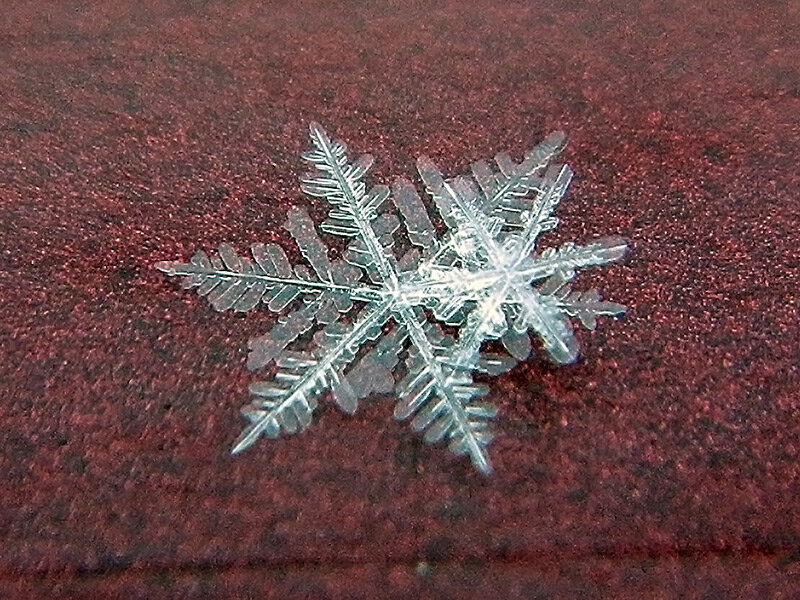 снежинка DSCN1188.jpg