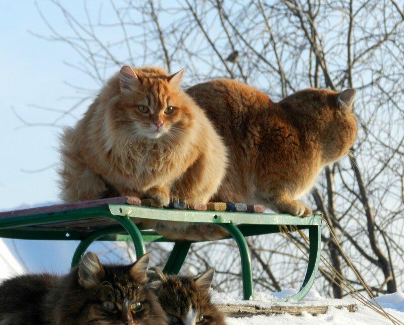 Кошки и воробей
