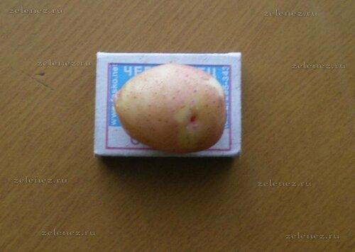 Оцените потенциал урожая картофеля.