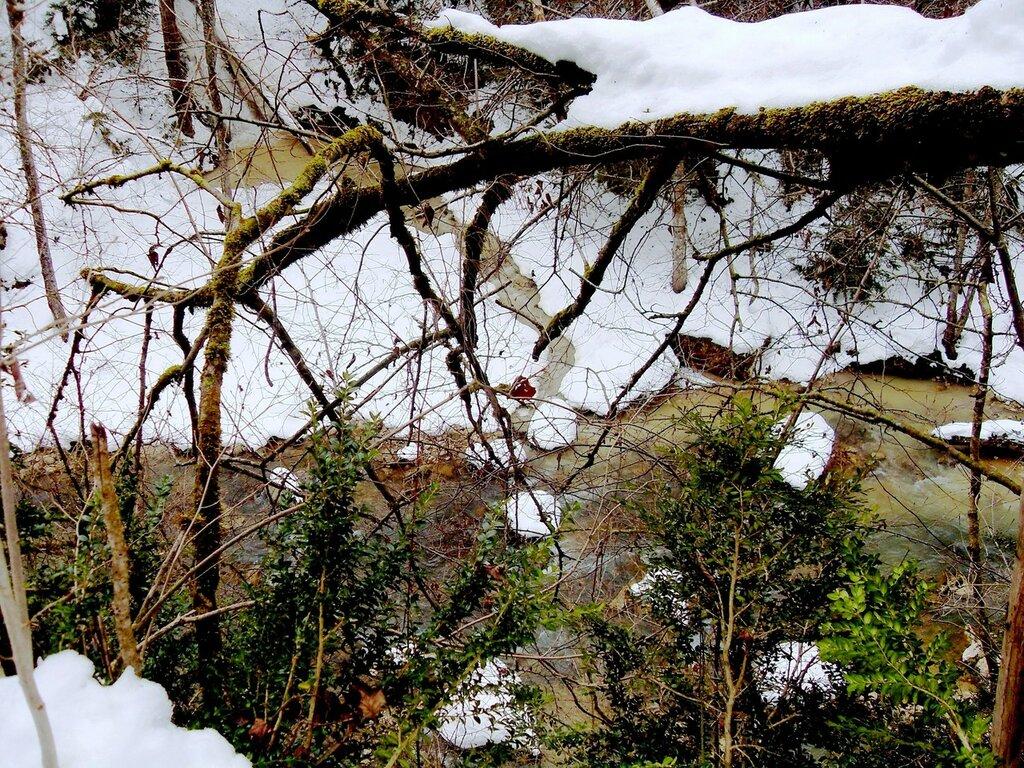 На зимних речных берегах ... SDC18651.JPG