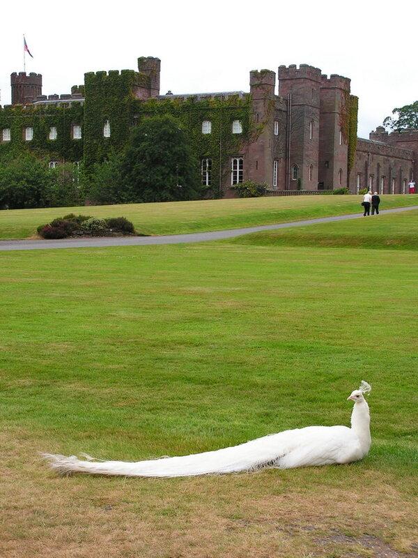 Замок Скон. Шотландия