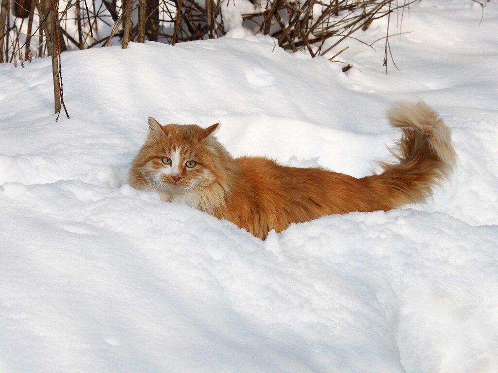 По уши снега.