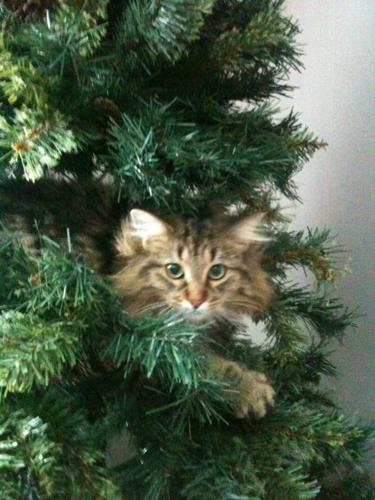 Коты на ёлке - фото 12