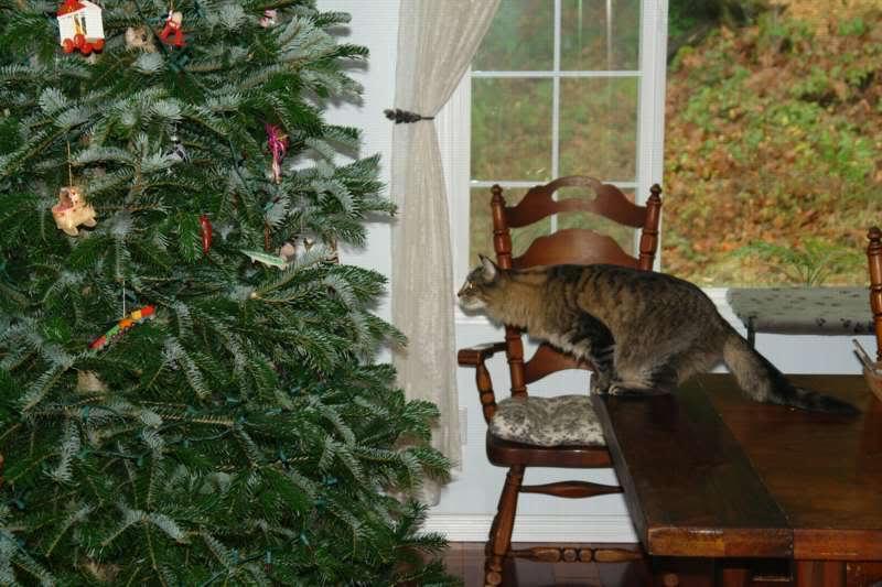Коты на ёлке - фото 31