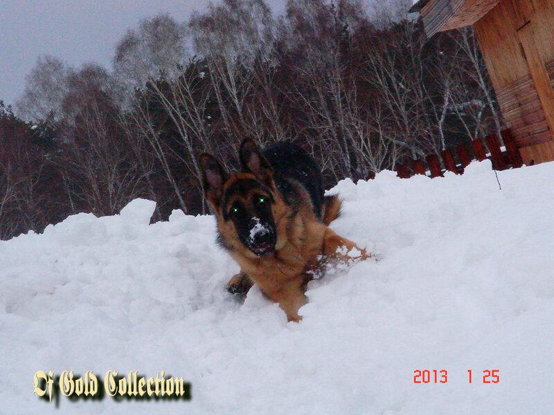 http://img-fotki.yandex.ru/get/6439/134559744.b/0_8f069_7f7092fc_XL.jpg