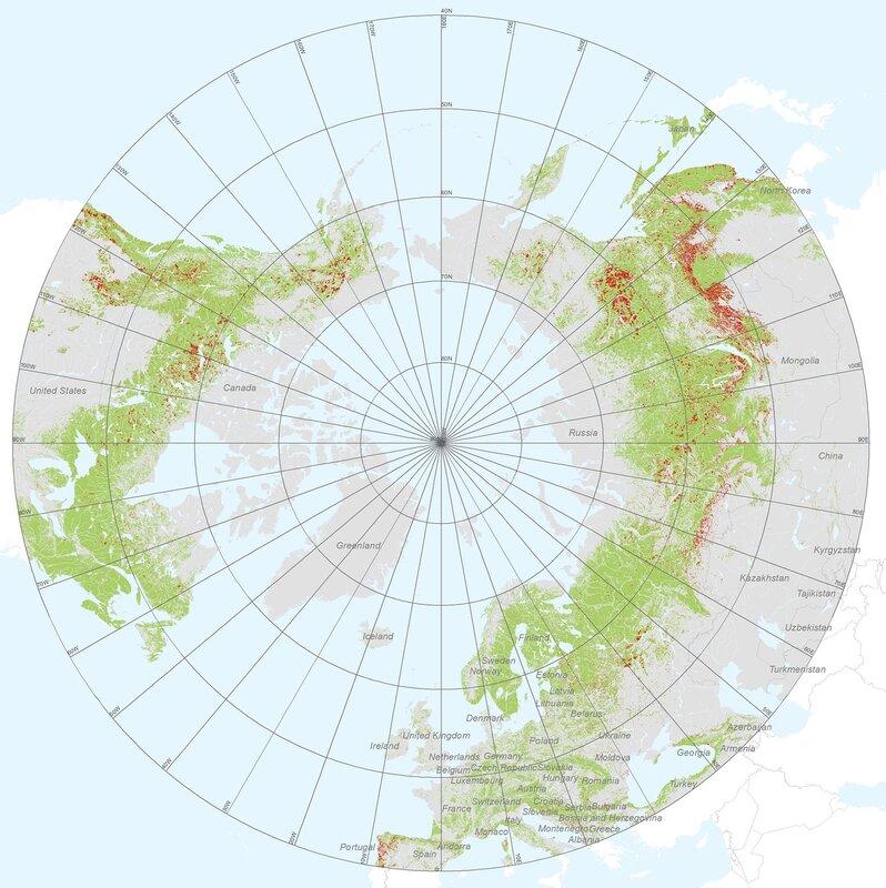 Карта леса россии гринпис