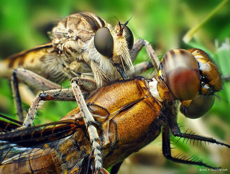 Комашки. Яркие краски фотографий мира насекомых