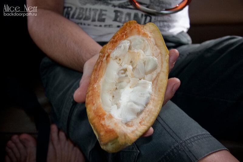 разрезанный плод какао